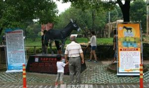 Changzhou Zoo showing memorial to donkey killed by tigers