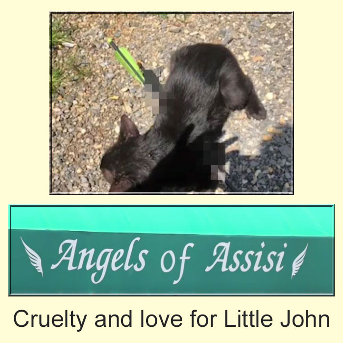 Cruelty and love for Little John (a cat)