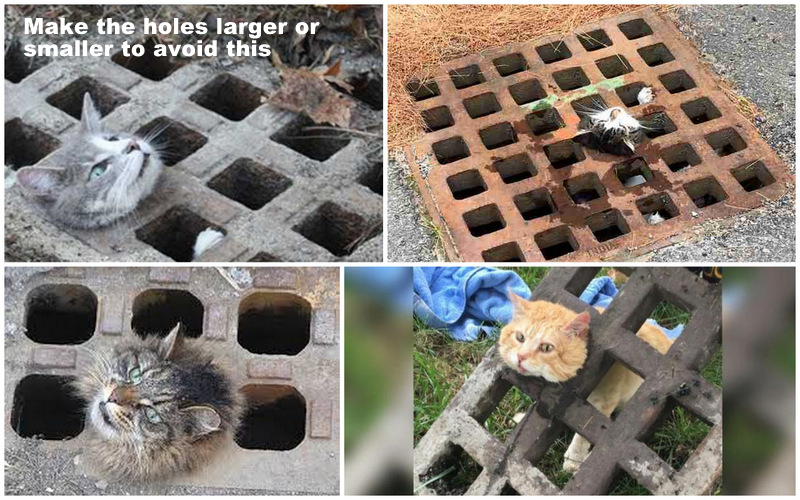 Make storm drain grates safe for cats, foxes and raccoons
