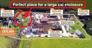 Ed Sheeran should have a large cat enclosure