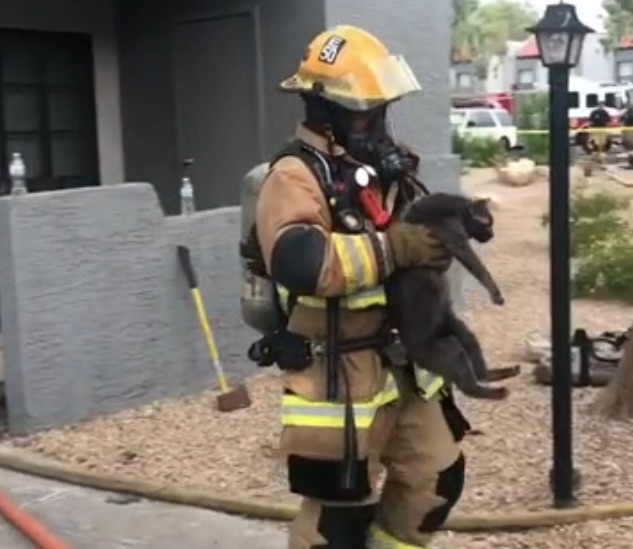 Firefighter carries cat to owner