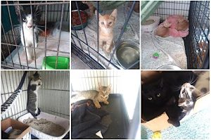 Glade County Animal Control pound cats