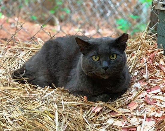 feral cat Grayson