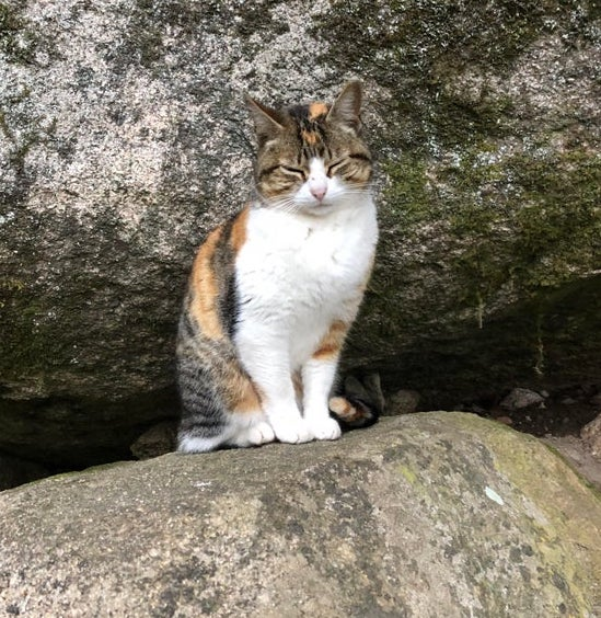 Lisbon stray cat