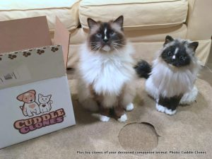 Plush toy clones of deceased pets