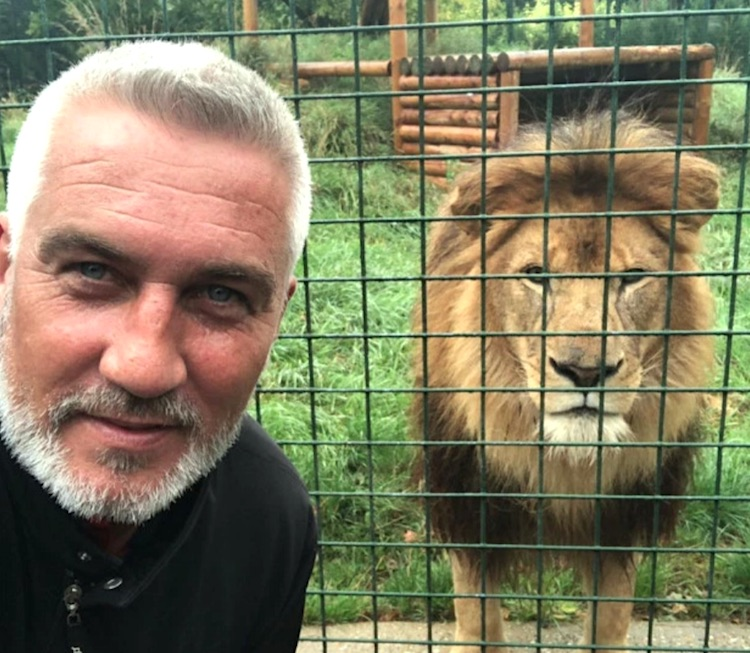 SImilarity between Paul Hollywood and lion