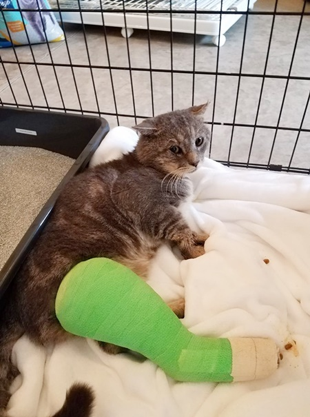 injured cat