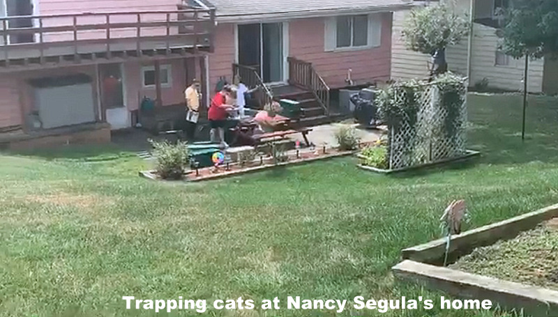 Cats removed from Segula's home