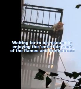 Cat awaits rescue on fire escape while building burns