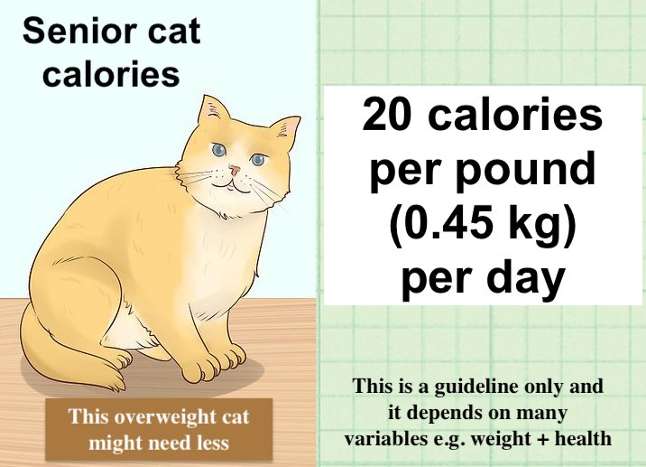 Senior cat calorie intake daily