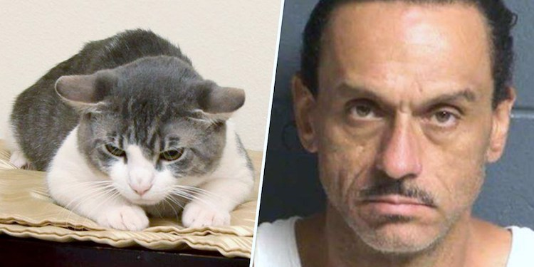 Spaulding and the cat he is accused of abusing
