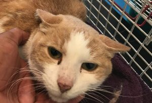 St. George's cat used up one of his 'nine lives' after becoming trapped in barbed wire