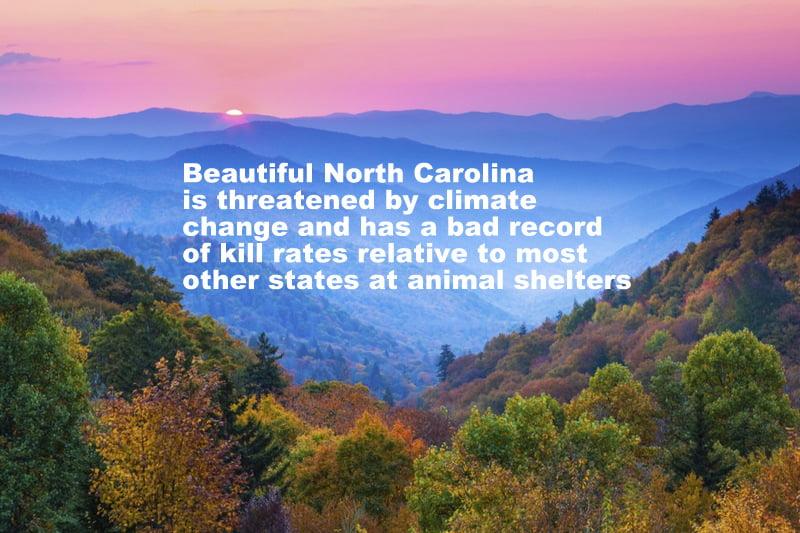 North Carolina's poor animal shelter kill rates