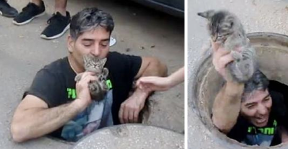 Kitten rescued from storm drain by heroic man