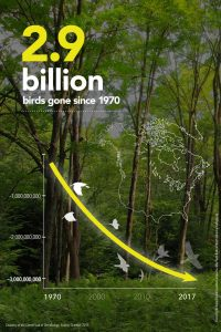 Bird decline inforgraphic from Cornell