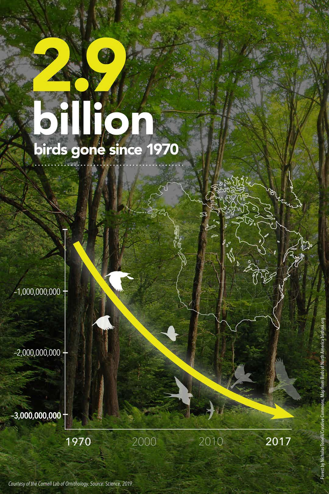Bird decline inforgraphic from Cornell