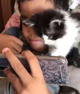 Boy and kitten play smartphone game together