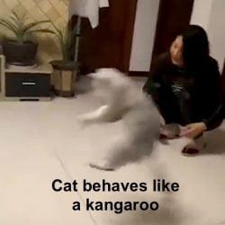 Cat behaves like a kangaroo