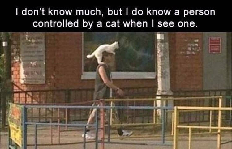 Cat controls person