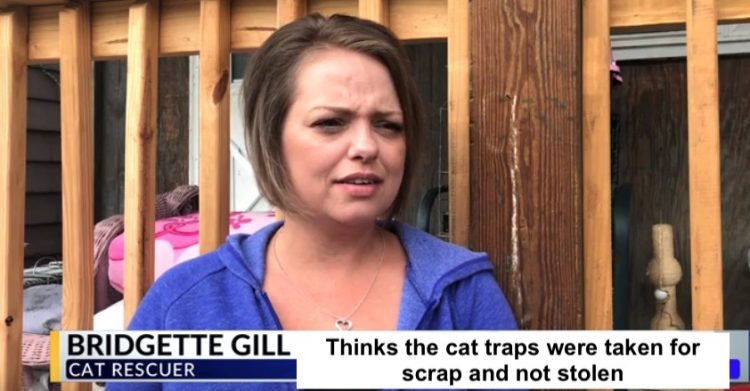 Bridgette Gill's cat traps stolen or not