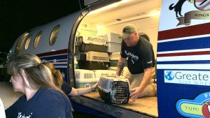 Cats transported from Bahamas to New Jersey shelter