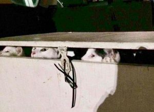 Cats in 'death box'