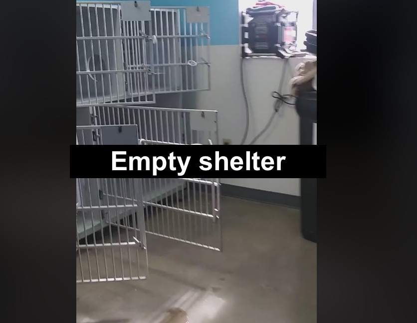 Empty Outer Banks SPCA shelter before Hurricane Dorian