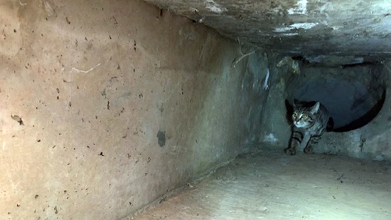 cat rescued from storm drain