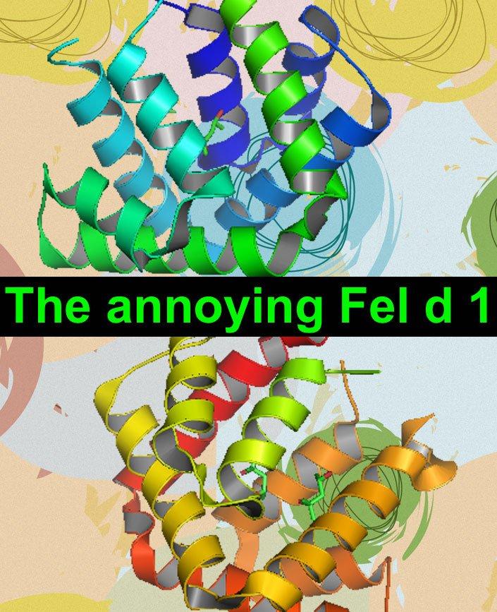 Fel d 1 structure