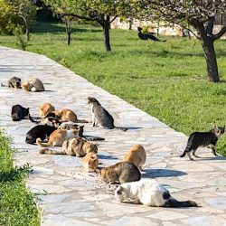 Feral cat colony. All short-haired cats