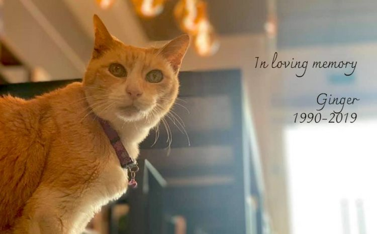 Ginger the world's oldest store cat?