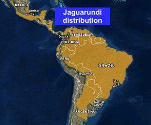 Jaguarundi distribution