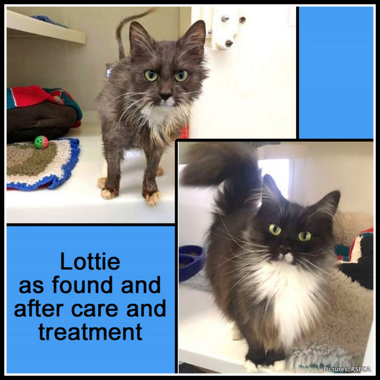 Lottie as found as a stray and after TLC from RSPCA. Pictures: RSPCA Derbyshire.