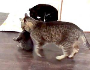 Grandpa Mason carrying a large kitten