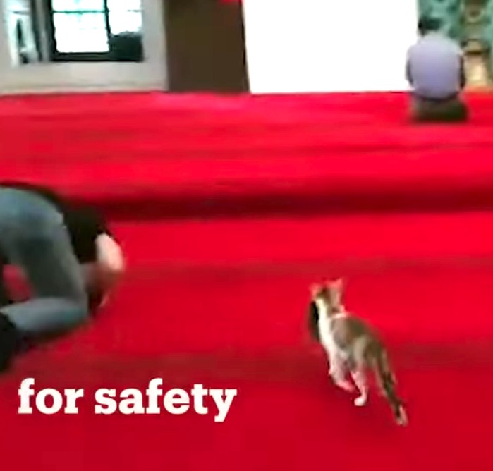 Mother takes her kitten to mosque for safety