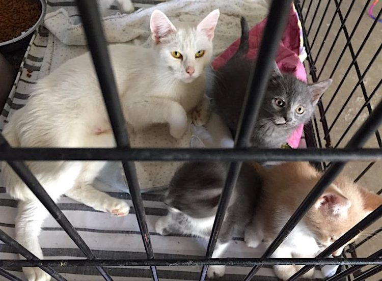 Sweet cats held in 'death box' about to be drowned  Picture