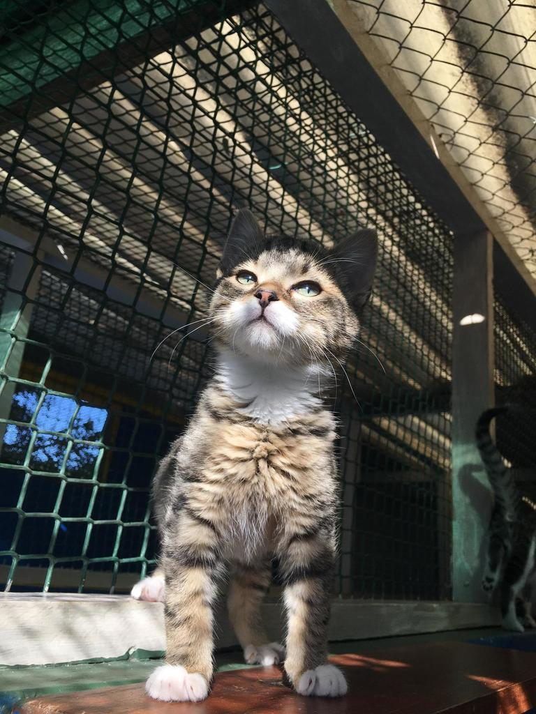 Picture of cat in shelter like being in prison