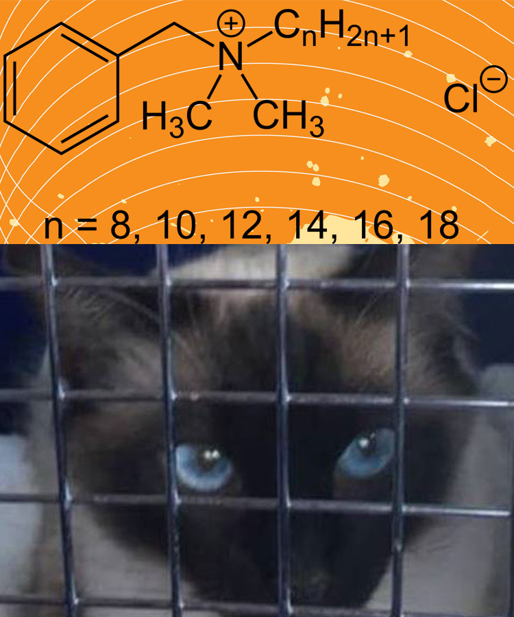 Poisoned cat from Benzalkonium Chloride