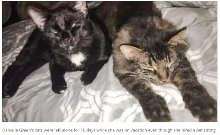 Two cat left alone for 16 days because cat sitter failed to turn up