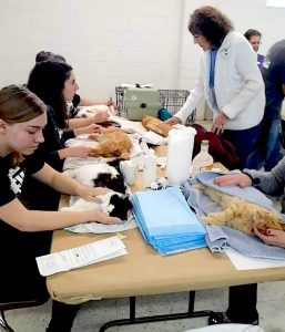 Volunteers wake up cats at clinic who have undergone spay and neuter operations