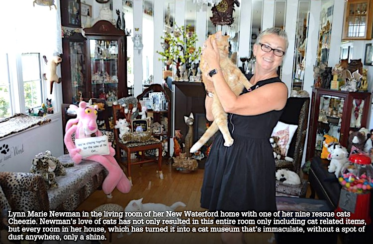 Waterford home celebrates domestic cats