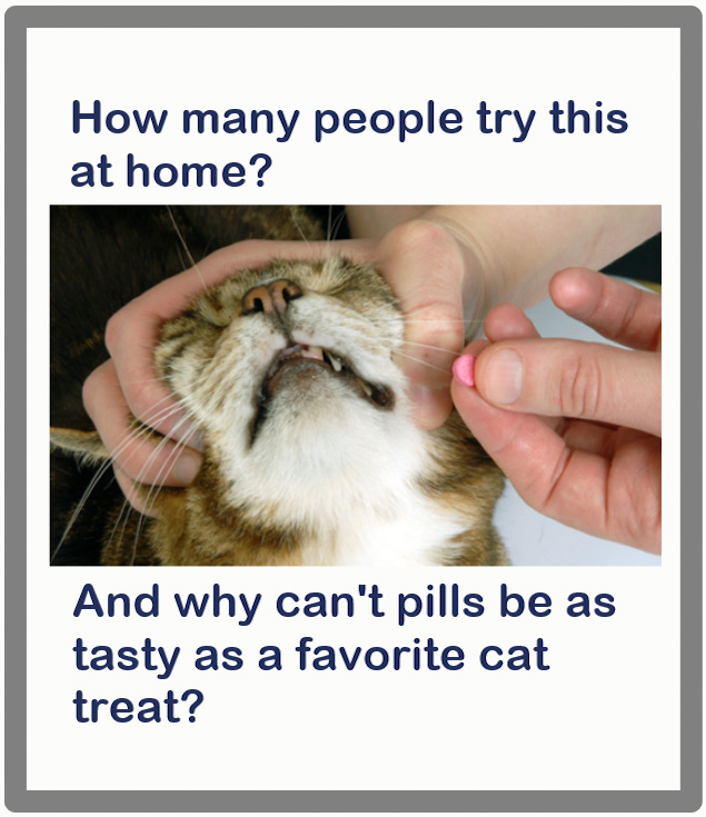 Why can't cat pills be tasty?