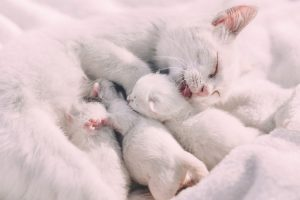 Mother cat and her young kittens