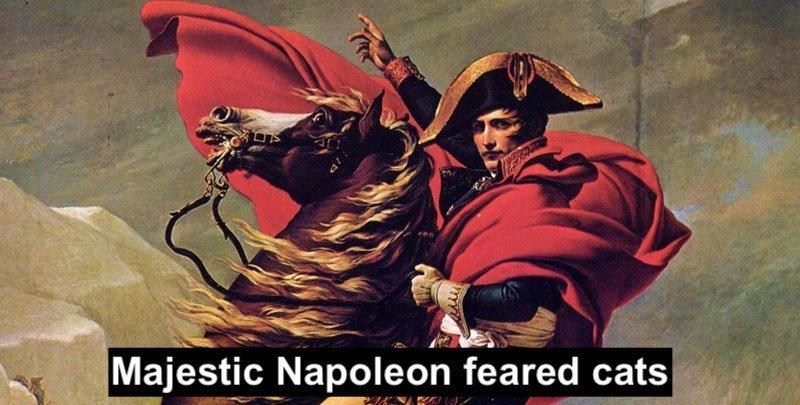 Napoleon was an ailurophobe