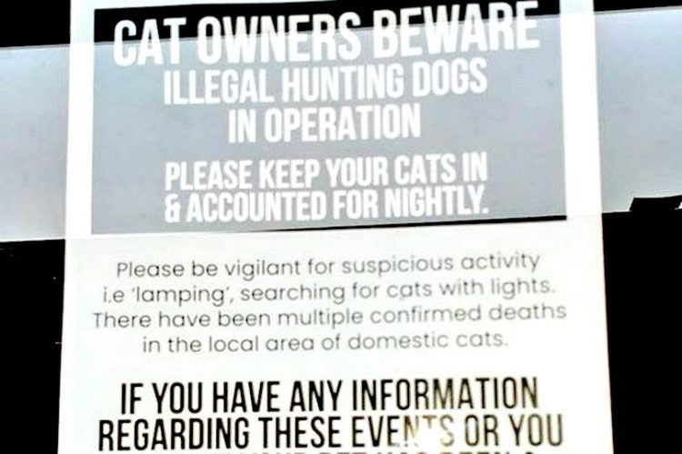 Lamping with dogs to catch domestic cats