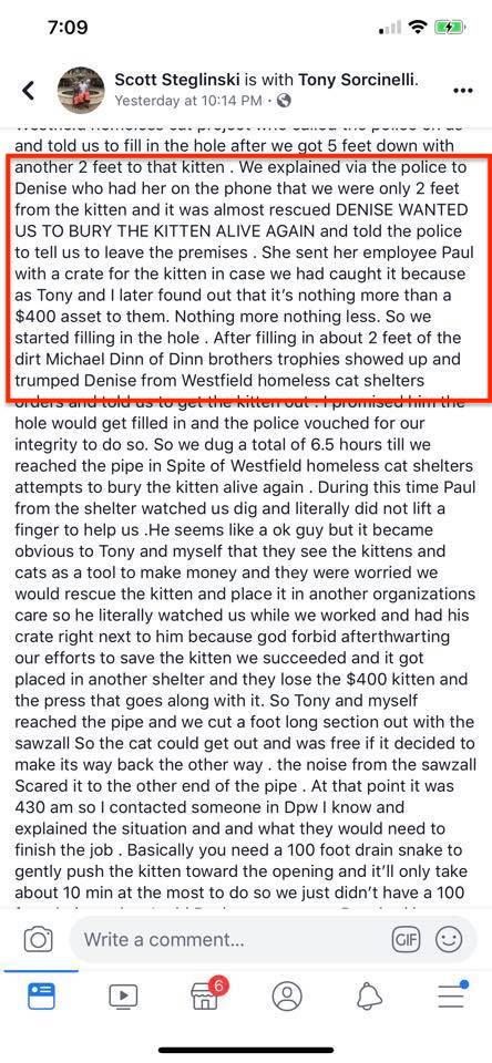 Cat rescue accused of being cold hearted