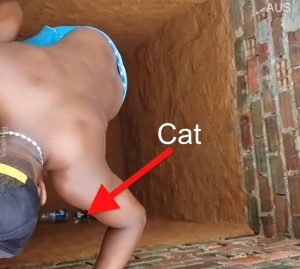 Calico cat runs out of deep hole