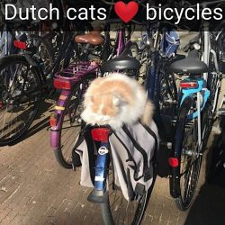 Campus cat, Doerak, sleeps on a bike