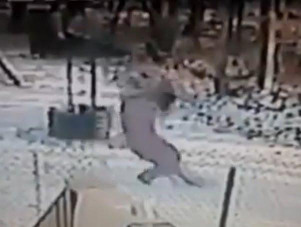 Cat attacks his owner