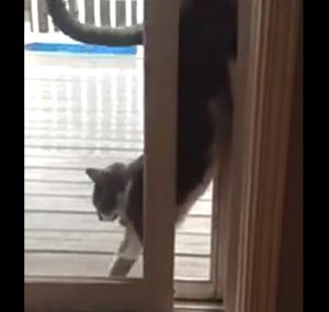 Cat gets through narrow gap in a unique way